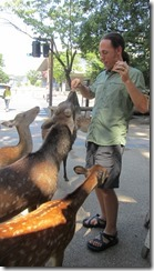 Feeding the Nara deer